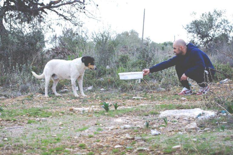 StrayCare.gr Αδέσποτη Φροντίδα Βοήθεια στην πληγείσα περιοχή της Μάνδρας Αττικής