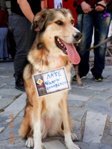late StrayCare.gr Αδέσποτη Φροντίδα