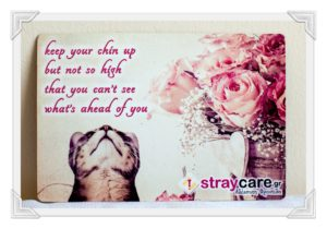e-shop StrayCare.gr Αδέσποτη Φροντίδαe-shop StrayCare.gr Αδέσποτη Φροντίδα