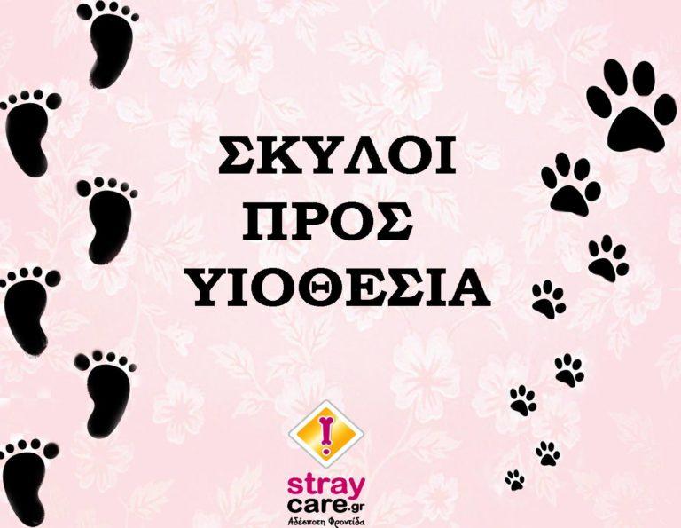adopt a dog StrayCare.gr Αδέσποτη Φροντίδα