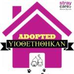 StrayCare.gr Αδέσποτη Φροντίδα - Adoptions 2015 - Υιοθεσίες 2015