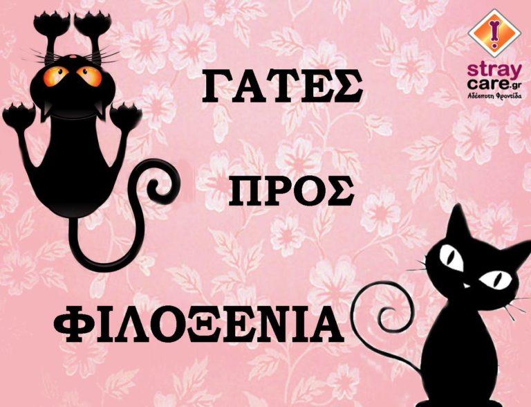 cat StrayCare.gr Αδέσποτη Φροντίδα φιλοξένησε