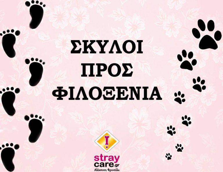 dog StrayCare.gr Αδέσποτη Φροντίδα φιλοξένησε