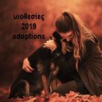 υιοθεσιες adoptions 2019 StrayCare.gr Αδέσποτη Φροντίδα
