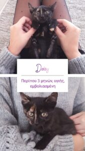 daisy StrayCare.gr Αδέσποτη Φροντίδα
